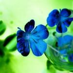 CC Flower pic
