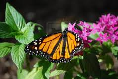 Butterfly-Cleveland-Cremation