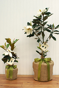 Plant a flower or tree to memorialize a loved one.